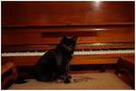 Pianokatten