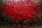 Kärlekens träd