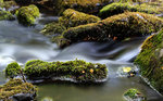 streamed forest water