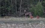Kunglig baby lycka i skogen