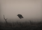 In the fog..