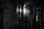 Forest Sunlight.jpg