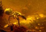 Alien Ant - Is back