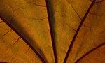 Sommarsol genom bladet