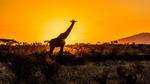 Gryning i Samburu