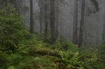 Gammelskog i dimma