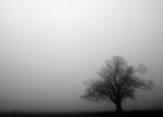 Just another foggy image of the old oak