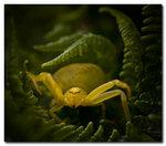djungel spider2