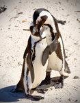 Pingvinkram