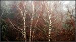Skogens nakna skrud