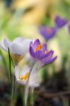 Tidigt om våren
