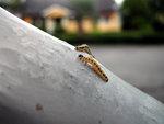 Två larver på spaning