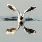 Spegelblank landning