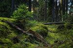 Till skogen