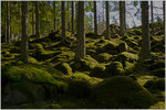 Smålandsskog