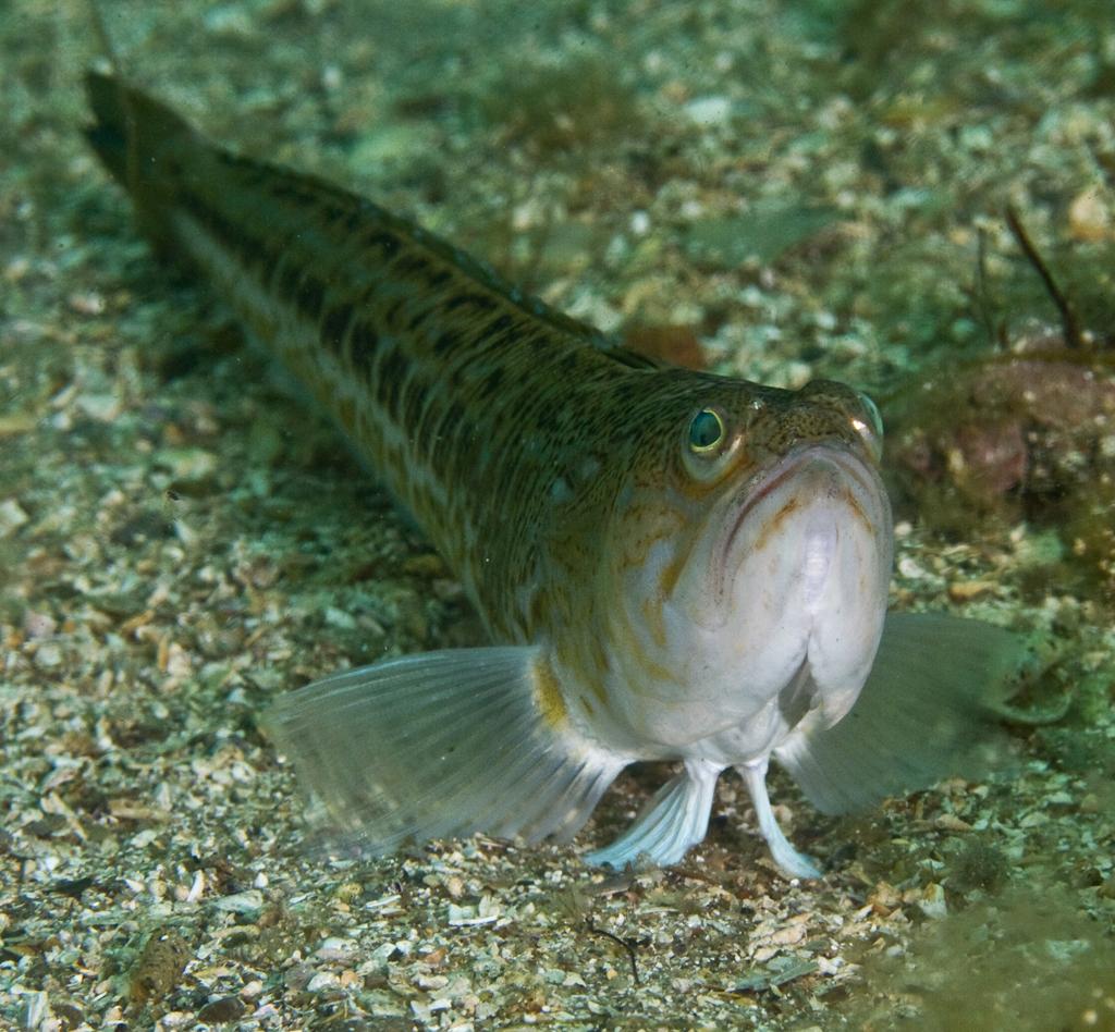 Andra fiskar i havet dejting online Gratis online dating webbplatser brisbane.