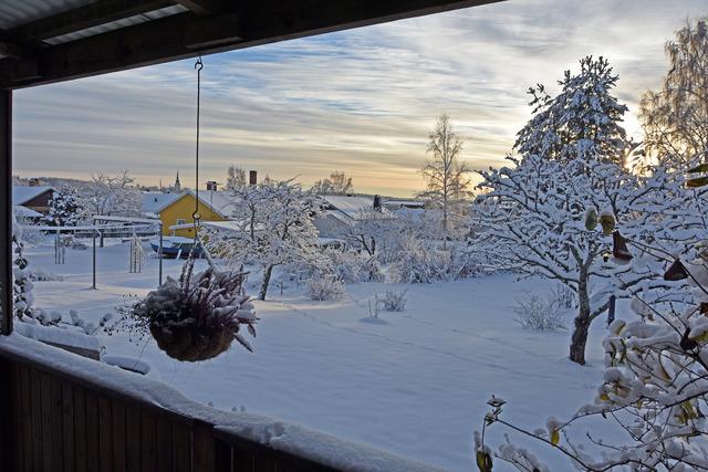 Vy över min Vinterträdgård DSC_0770