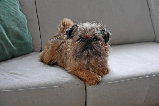 Dennis tar igen sig i soffan P1020854