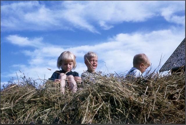 Peter(i mitten) åker på hölasset på Lillåkern 1965  Minolta ER och Kodachrome 135 film