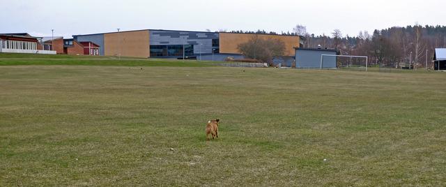 P1040694 Dennis på språg över gräsmattan vid Lindesby Strandängar