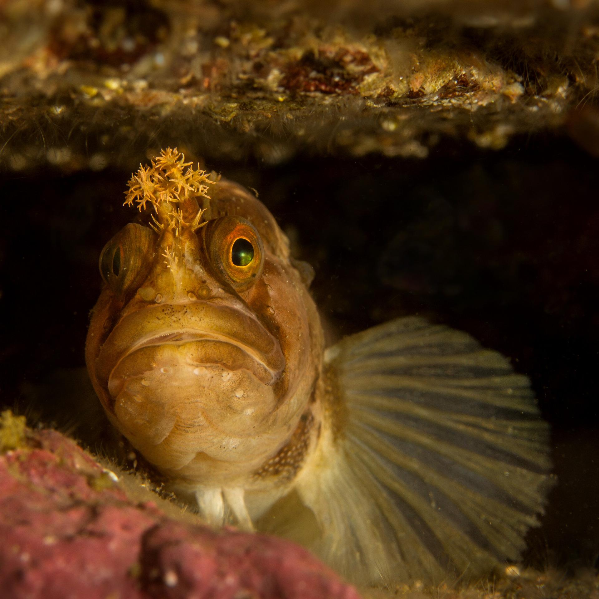 japansk bläck fisk kön Teen Pussy videor nedladdning
