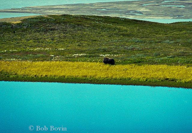 #348. Den isolerade landningsbanan?? –vid inlandsisen på Grönland!! - Fotosidan