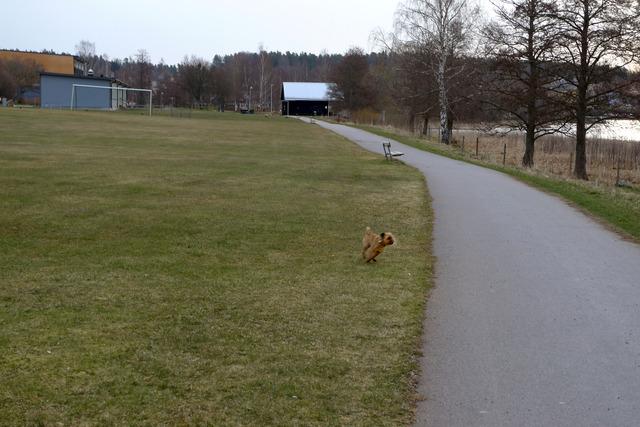 P1040698 Dennis springer av sig på Lindesby Strandängar