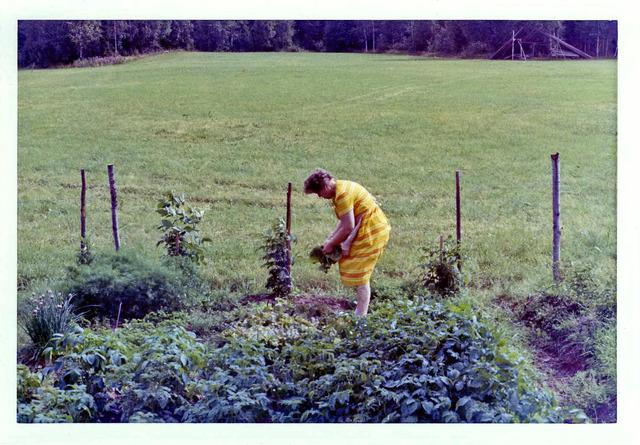 Mamma plockar grönsaker på Drabo sommaren1982032