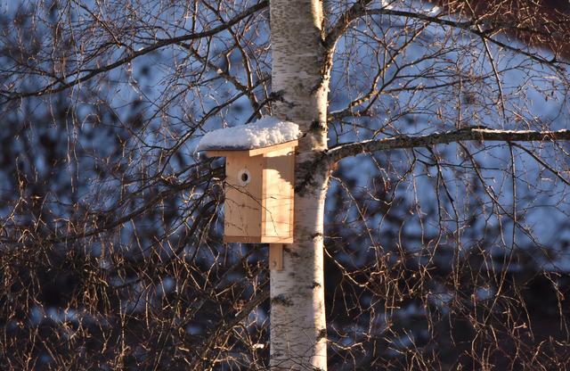 Fågelholk hos en granne DSC_0811
