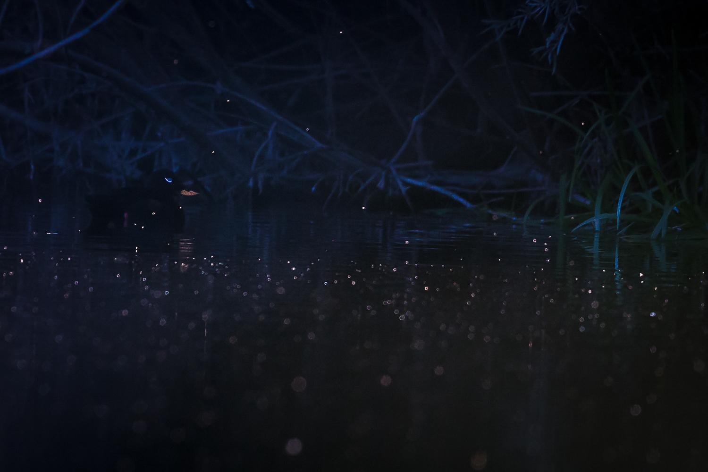 ebenholts svarta rör