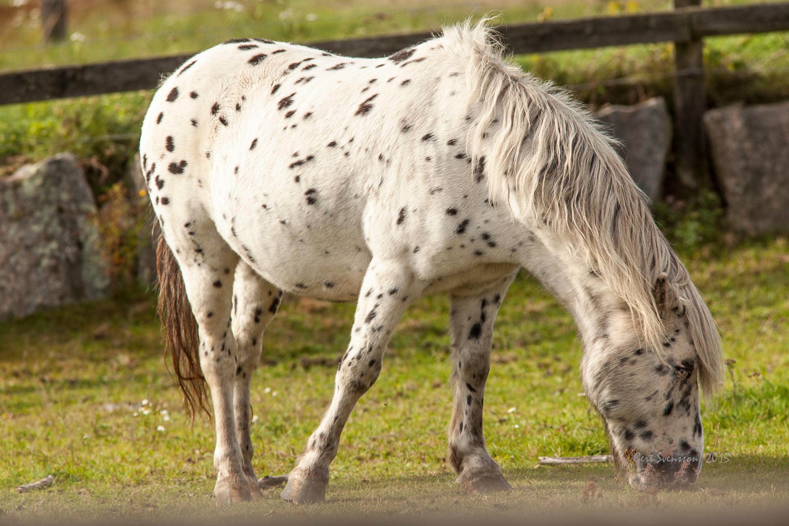 pippis häst