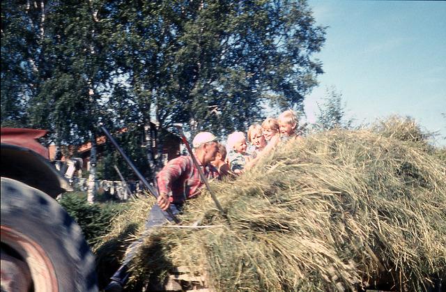 höbärgning på lillåkern 1967_redigerad