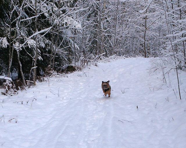 Dennis springer på vår skogsväg 2016 DSC_0378DSC_0378