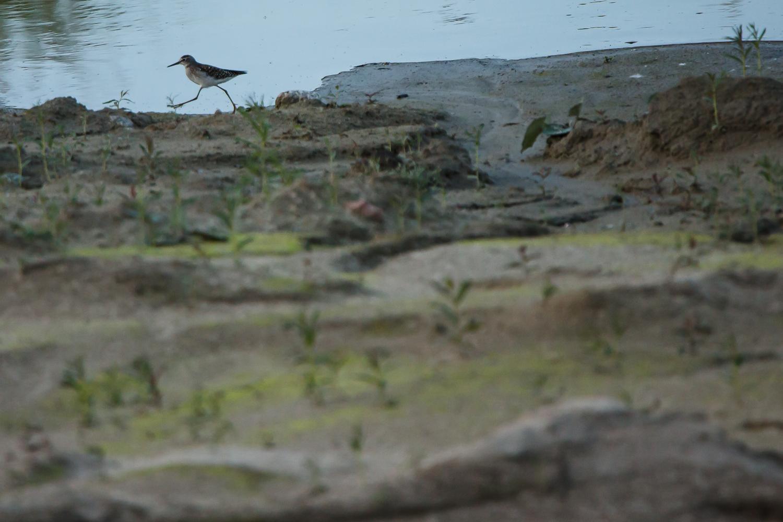 Fotograferande ornitolog