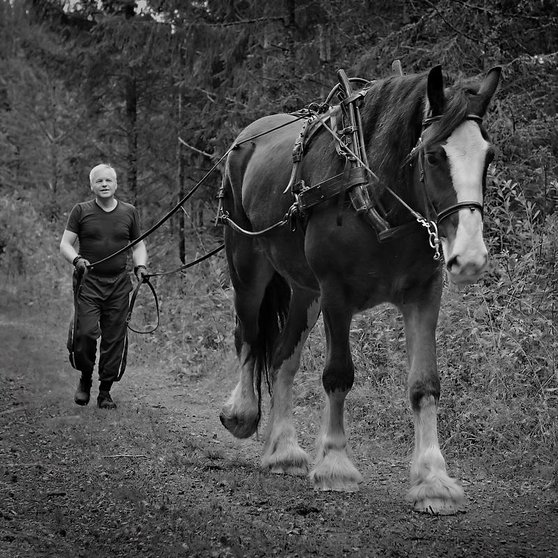 världens största hästras
