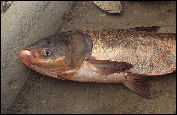 Gott Om Fisk Dejting Sökning
