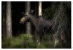I den mörka skogen...