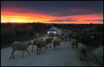 Kväll i Extremadura