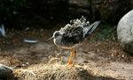 Fågel i sol