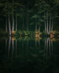 Höst i trollskogen