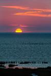 Fågelsträck under Vadehavets kvällssol