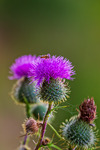 Beautiful and Prickly...