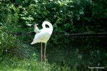 Halsbrytande Flamingo