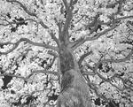 Infrarött ljus mot träd