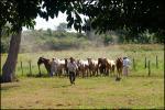 Ranch i Pantanal