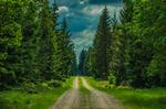 En skogspromenad