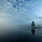Granen i dimman