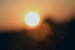 Blåklocka som är vänd mot solen