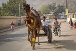 086 camel carriage.jpg