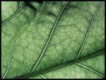 Mönster i blad